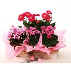 Flores en el cajón